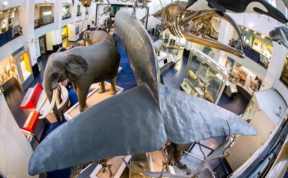 يضم المتحف أنواعاً عديدة من الحيوانات، والثعابين، والأسماك. ومن المثير أن يكون الزائر على مسافة قريبة للغاية من مختلف الحيوانات الشرسة والخطيرة، مثل الأسود، والدببة، والتماسيح. الصورة: Natural History Museum.