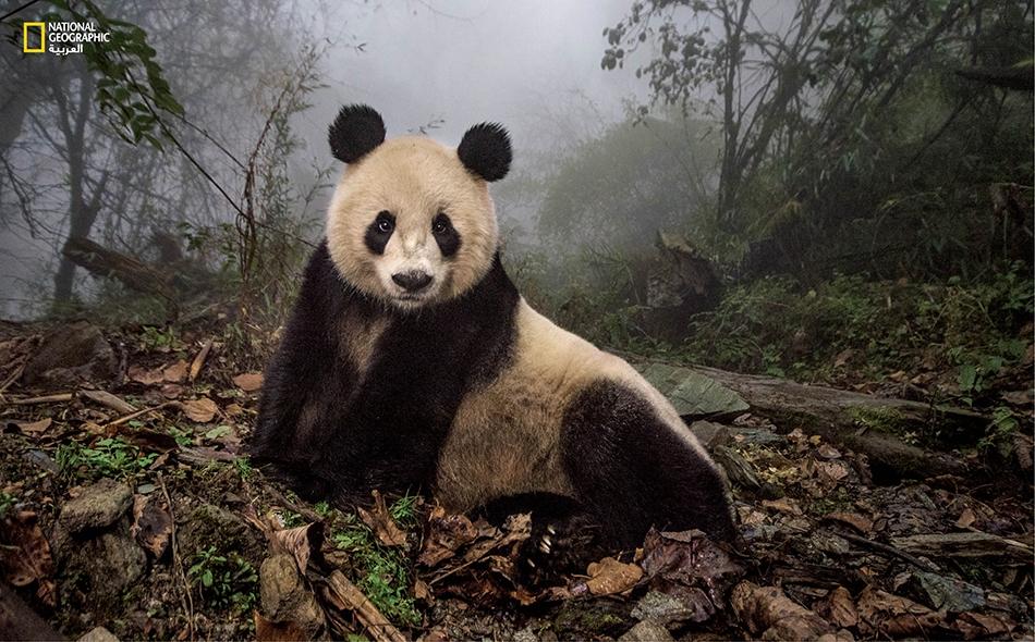 """قالت وزارة البيئة الصينية الشهر الماضي إنها وافقت على خطط 15 إقليماً ومنطقة لوضع """"خطوط حمراء""""، تحظر إقامة أي مشروعات للتنمية على أجزاء كبيرة من أراضيها. الصورة أرشيفية"""