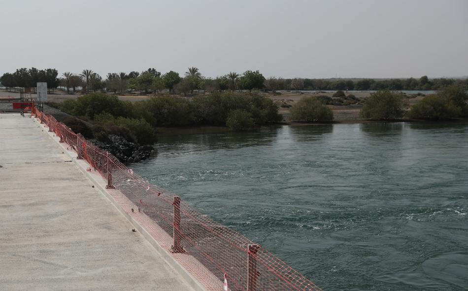 """تضم محمية جزيرة """"القرم"""" في كلباء العديد من أنواع الطيور النادرة في الإمارات."""