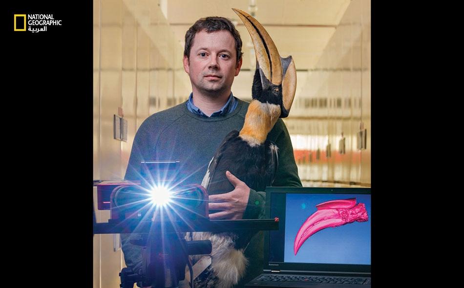 """خبير علم الأحياء التطوري """"غافين توماس"""" يمسك عيِّنة من طائر أبي قرن الأكبر لدى """"متحف التاريخ الطبيعي"""" في لندن. درَس بمعية فريقه مسوحا ثلاثية الأبعاد لمناقير آلاف الطيور، مثل أبي .محشة أسود المنقار"""