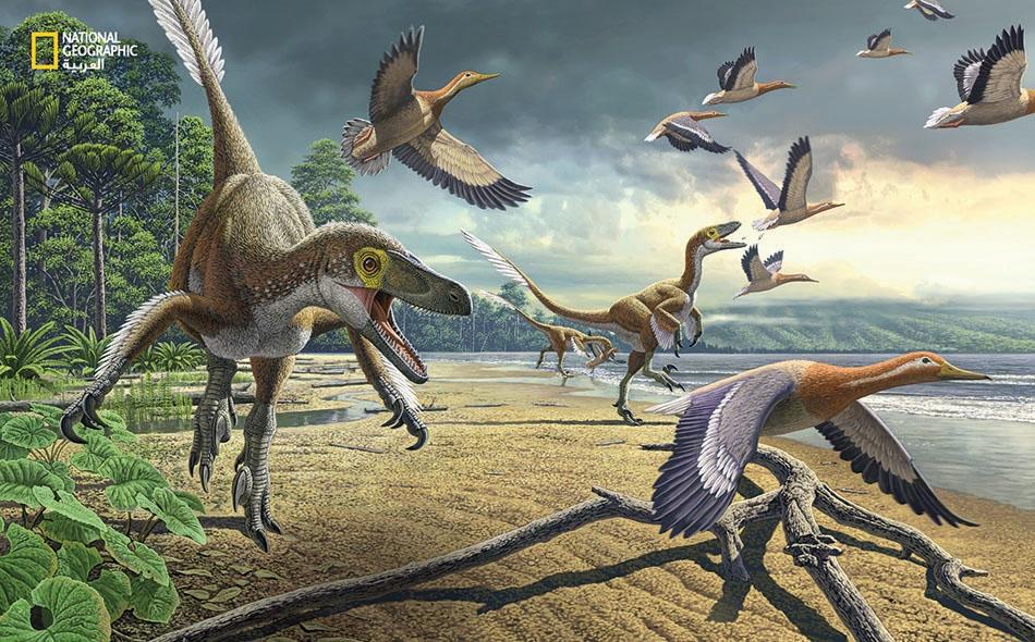 """هل كانت الديناصورات مثل هذه """"الدروماصورات"""" تقتات على أقارب البط القديم في أنتاركتيكا؟ كانت هذه القارة المتجمدة مختلفة تماما عمّا هي عليه اليوم قبل نحو 67 مليون سنة، لكن الأحافير تكشف الشبه الكبير بين طائر """"فيكافيس ياي"""" والبط الحديث. إنها أقدم أحفورة..."""