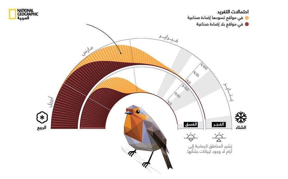قد تدفع الهرموناتُ التي تحفزها الإضاءةُ الصناعية ليلاً الطيورَ المغردة -مثل أبي الحناء- إلى بدء إطلاق صيحات التزاوج في وقت أبكر من الموعد الطبيعي.