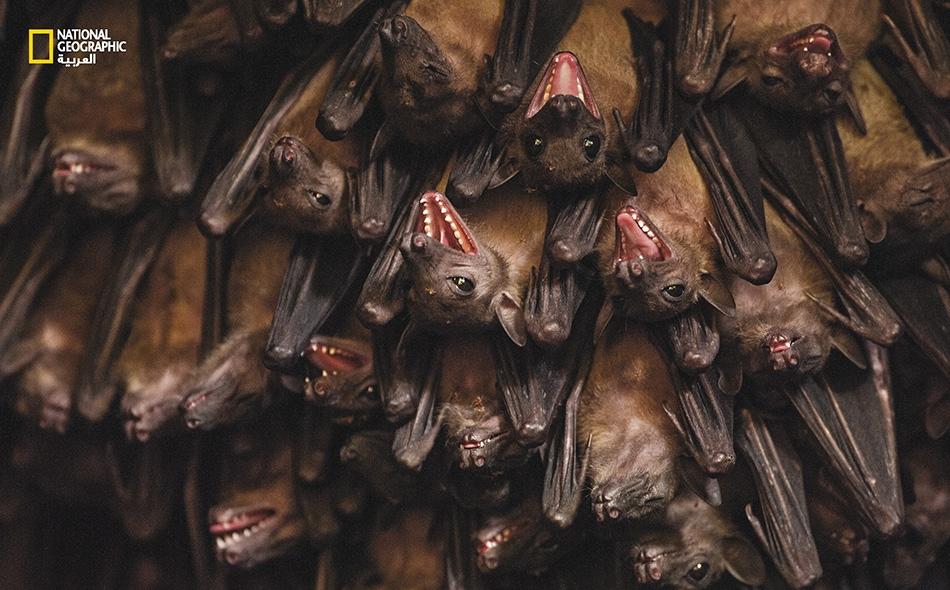 خلال مهمة داخل كهف يعجُّ بالخفافيش والأفاعي، ظنَّ مصور فوتوغرافي مخضرم أنه على دراية وخبرة كافيتين بالأخطار المحدقة بالمكان. لكنه لم يكن يدري أن ما يهدد حياته بحق يتربص به في الخارج.