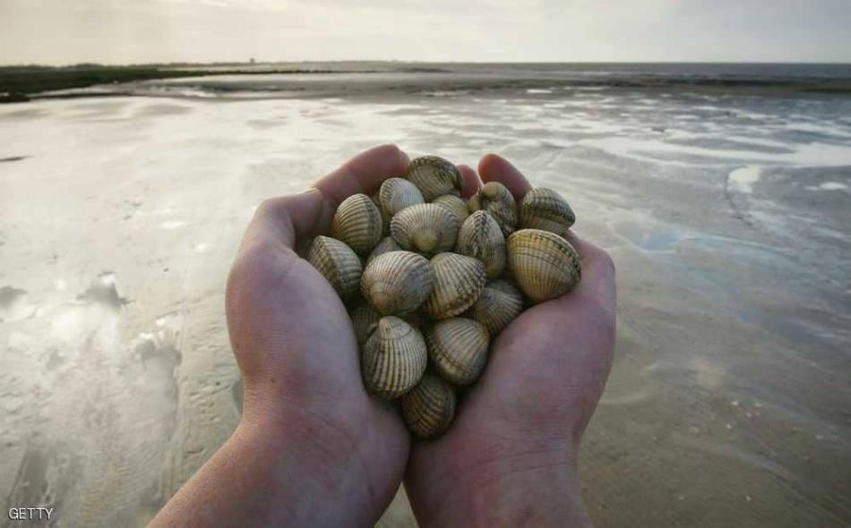 """طبقا لموقع """"سكاي نيوز""""، فقد اختبر العلماء سكريات القواقع البحرية في علاج سرطانات الدم والثدي والرئة والقولون، حيث أظهرت نتائج مشجعة إيجابية."""