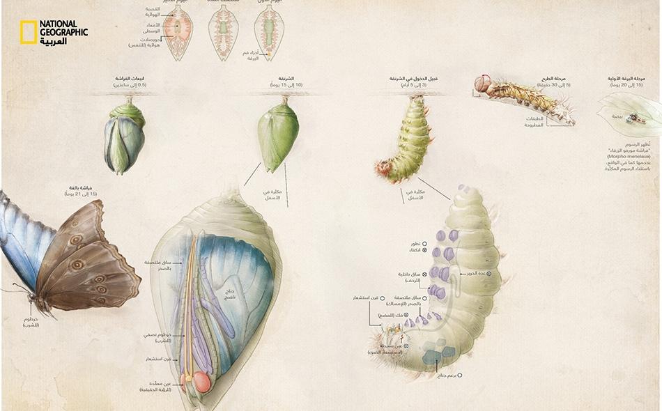 برمجة وراثية من أجل التحول