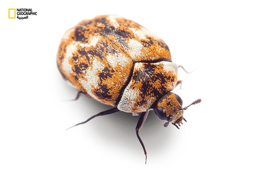 حشرات.. تشاركك المسكن