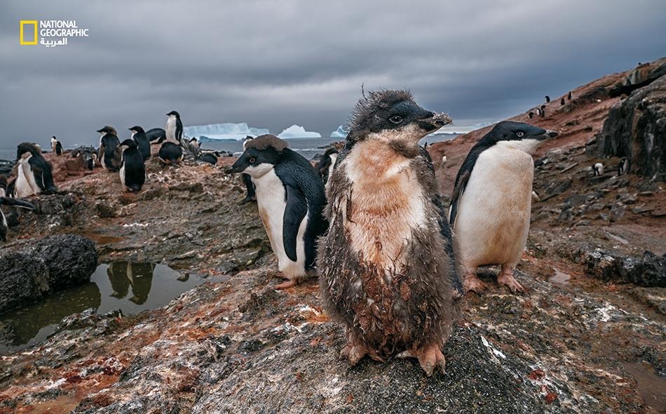 يقدر العلماء أن كل زيادة بمقدار درجة واحدة مئوية في درجة حرارة سطح البحر ستؤدي إلى انخفاض بنسبة 12 بالمئة في عدد الثدييات البحرية. الصورة: Cristina Mittermeier