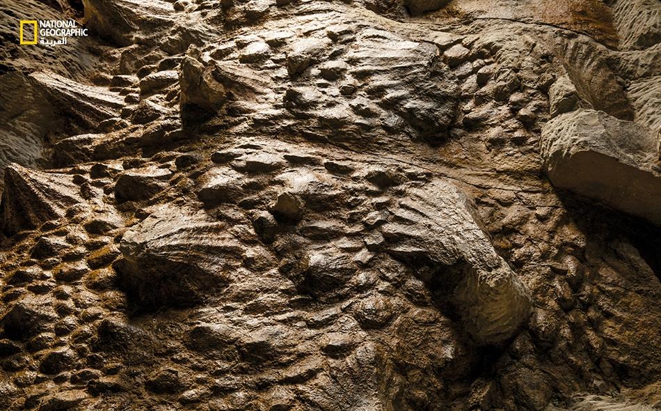 """تُغطي جلدَ """"زول"""" صفائح عظمية مدرعة (Osteoderms). أما أشكالها الشائكة فتتخذ مظهراً أضخمَ بفعل الأغماد البنية المكونة من الكيراتين، البروتين ذاته المسؤول عن تكوين شعر الإنسان وأظافره."""