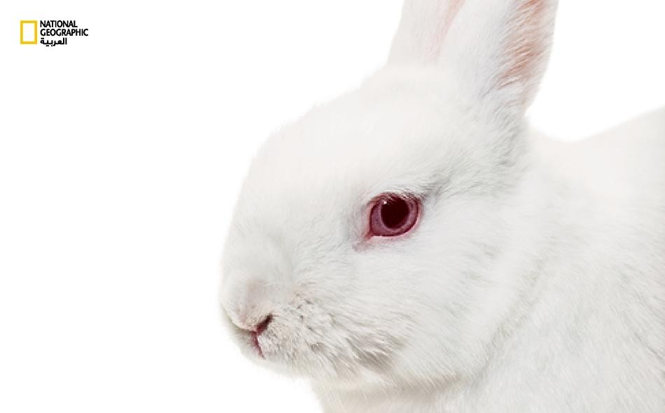 رفقًا بعيون الأرانب