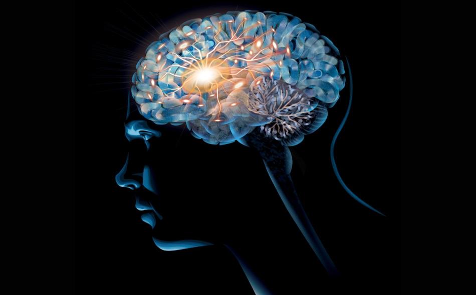 كلما زادت عوامل الإصابة بأمراض الأوعية الدموية، كلما تدهورت صحة المخ كما يتضح من انكماش حجمه، وتراجع حجم المادة الرمادية، واعتلال المادة البيضاء. الرسم: Daniel Hertzberg