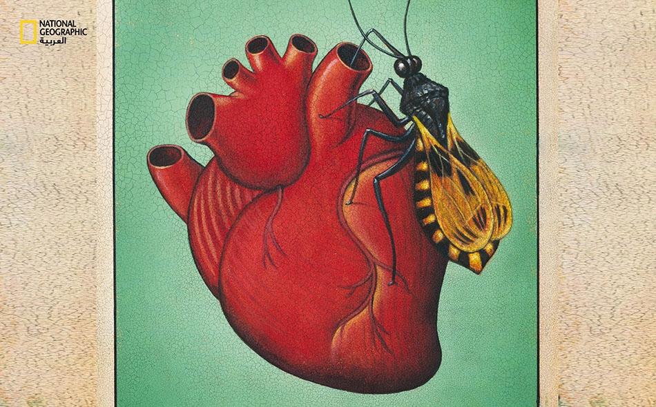 يمكن لهذا الطفيلي أن يعيش في الجسم طوال عمر الإنسان من دون أي أعراض، لكن قلوب ما بين 20 و 30 بالمئة من المصابين ستتأذى منه.