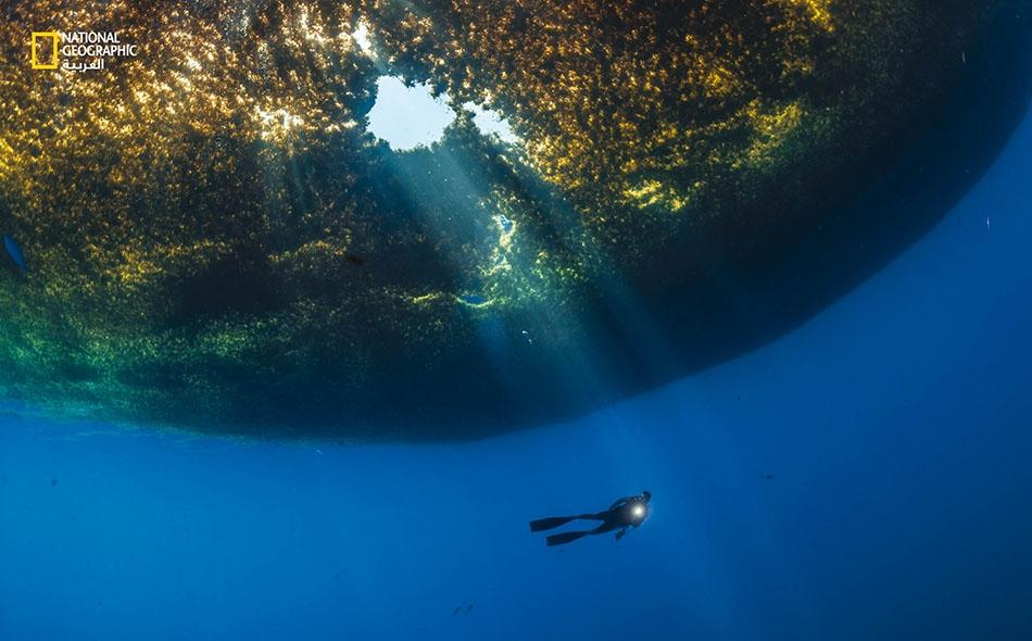 """غواص يسبح تحت كتلة سرجس تخترقها أعمدة أشعة الشمس، بالقرب من جزيرة """"كوزوميل"""" في المكسيك. وقد جُرفت كتل سرجس كبيرة بصورة غير عادية باتجاه الشواطئ في خليج المكسيك والبحر الكاريبي وأماكن أخرى، حيث لوثت الشواطئ التي يقصدها السياح."""