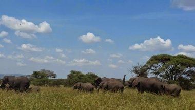 أفادت الرئاسة في تنزانيا أن أعداد الفيلة زادت من 43 ألفا و 330 عام 2014 إلى ما يزيد على 60 ألفا حاليا، وأضافت أن العدد بالنسبة للكركدن ارتفع من 15 إلى 167 على مدى السنوات الأربع الماضية. الصورة: UKARIMU