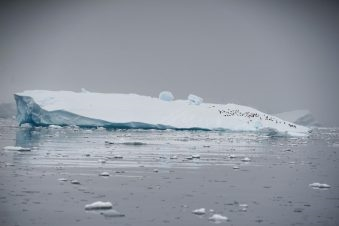 يعتقد علماء بأن الاحتباس الحراري تسبب بقدر كبير من ذوبان الجليد لدى أنتاركتيكا، لدرجة أن الغطاء الجليدي العملاق في طريقه للانهيار؛ وهو ما سيسفر في نهاية المطاف عن ارتفاع مستوى سطح البحر عالميا بنحو ثلاثة أمتار على الأقل في القرون المقبلة. الصورة:...