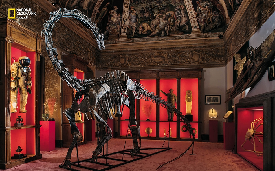 """هيكل عظمي مركب لديناصور """"كاتيدوكوس سيبيري"""" يتوسط تشكلية مختارة من المعروضات في معرض """"ثياتروم موندي"""" بإيطاليا."""