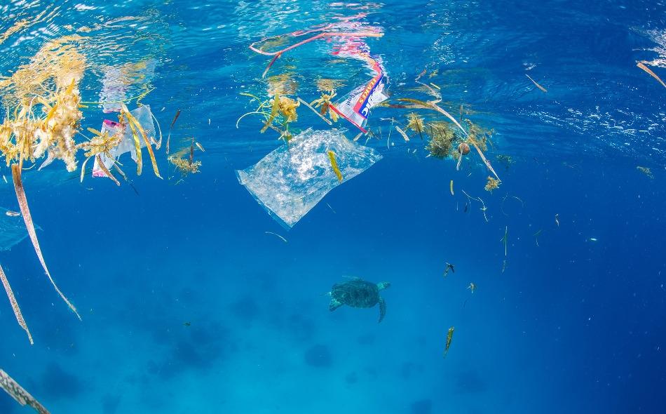 """تم اختبار عينات فضلات 8 أشخاص في """"وكالة البيئة النمساوية""""، وعثر على ما يصل إلى تسعة أنواع مختلفة من البلاستيك يتراوح حجمها بين 50 و 500 ميكرومتر في عينات الفضلات. وتضمنت العينات في المتوسط 20 جزيئة بلاستيكية لكل عشرة جرامات من الفضلات. الصورة: Steve De..."""