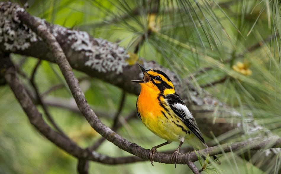 """ذكر تقرير صادر عن """"جمعية أودوبون الوطنية"""" أن الإخفاق في إبطاء وتيرة الانبعاثات الضارة، التي تؤدي لارتفاع درجة حرارة الأرض، سيؤدي لتعرض 389 نوعا من أصل 604 أنواع من الطيور في أميركا الشمالية للانقراض. الصورة: Shirley Donald/Audubon Photography Awards"""