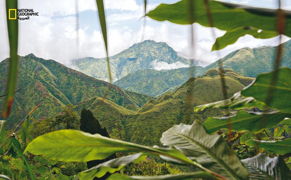 """يزداد عدد المغامرين الجريئين الذين يقصدون """"منتزه هوانغ لين الوطني"""" عند حدود فيتنام مع الصين. يعد المنتزه موطنًا لغابات الهيل الأسود الذي يسمى محليًا """"ثاو كوا"""" (thao qua)، وهو من التوابل الأساسية في إعداد حساء """"بُّو"""" وغيره من الأطباق الفيتنامية."""