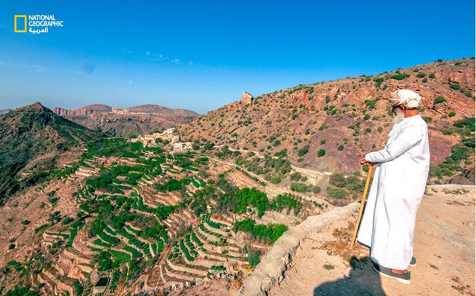 """فوق أحد مدرجات الجبل الأخضر، يقف """"ناصر العمري"""" متأملًا مزارع الورد الممتدة أمام ناظريه وهي تكتسي باللون الأخضر."""