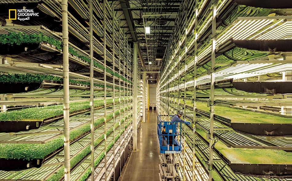 """تشرف شركة """"آيروفارمز"""" (Aerofarms) بمقرها في """"نيوارك"""" بولاية نيوجيرسي على أكبر مزرعة عمودية مغلقة في العالم، وتهدف إلى زراعة الخضراوات على نحو مستدام في قلب المدن على مدار العام. تزرع النبتات الخضراء الصغيرة على طبقات قابلة لإعادة الاستعمال صنعت من..."""