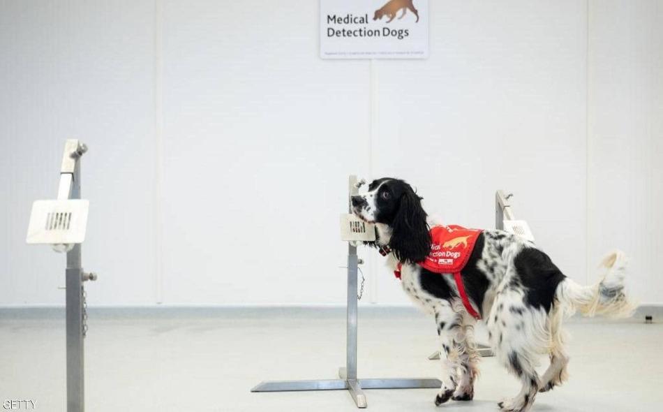 كلاب مدرّبة تكشف عن فيروس كورونا