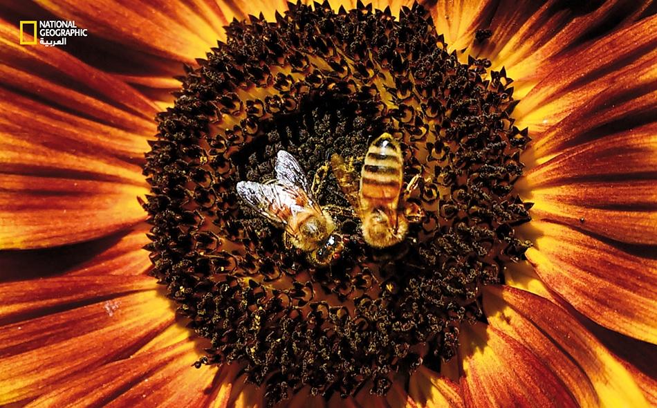 تنتج الأزهار حبوب اللقاح، وكذلك تفعل الأشجار والعشب والأعشاب الضارة. تتسم حبوب اللقاح بدقتها، لذا يسهل على الرياح التقاطها وإيداعها في تجاويف الأنف.