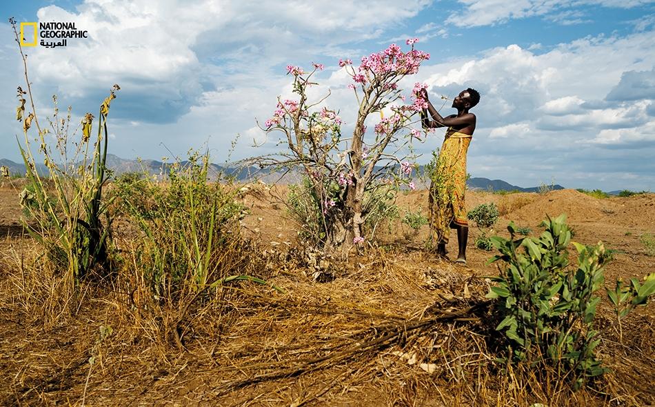 """يقطف رجلٌ من قبيلة """"كارا"""" ورودًا صحراوية في """"وادي نهر أومو"""" ذي التنوع البيولوجي بجنوب غرب إثيوبيا."""