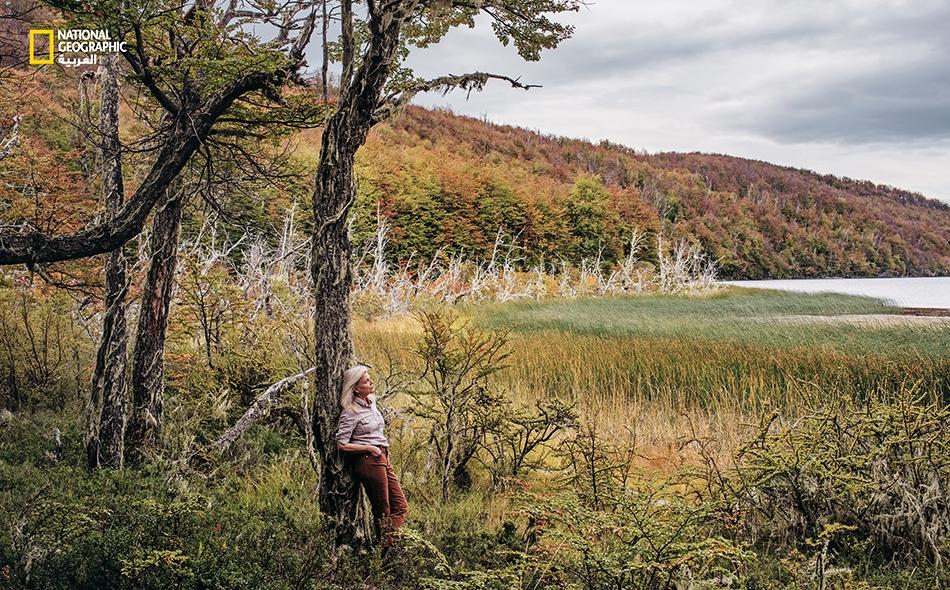 """تسترخي """"كريس تومكينز""""، من """"مؤسسة تومكينز لصون الطبيعة""""، بالقرب من """"بحيرة لا بيبا"""" لدى """"منتزه باتاغونيا الوطني"""" في تشيلي. تؤوي هذه الغابة المتعافية جماعات متنامية من غزلان """"الهيمول"""" المهددة بالانقراض. تقول تومكينز: """"المناظر الطبيعية بلا حيوانات برية هي..."""