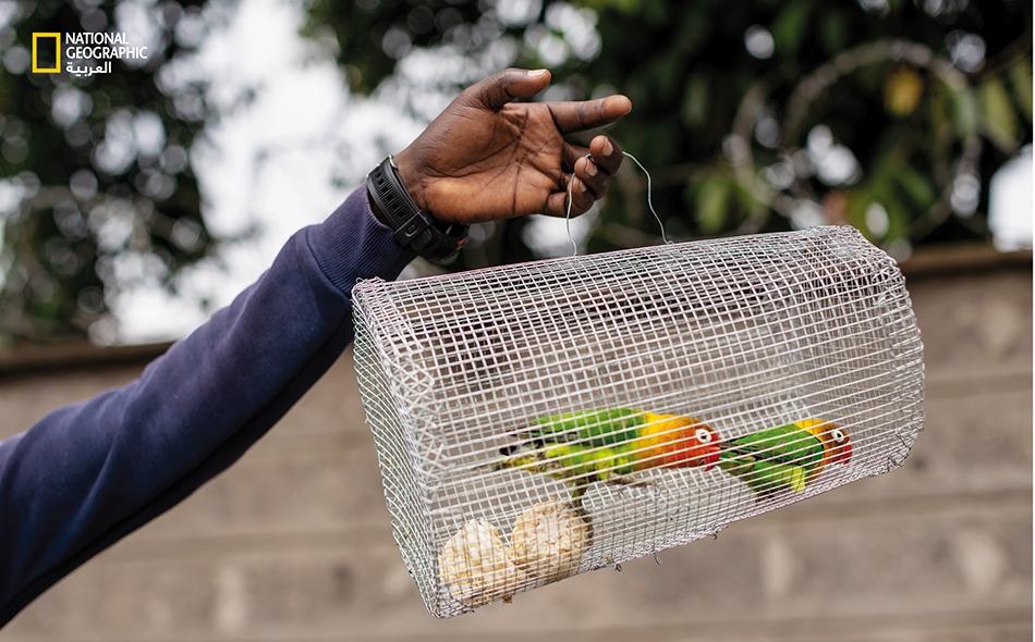 في الاقتصادات غير النظامية، لا يستطيع الباعة، مثل تاجر الطيور هذا، تحمل المكوث في المنازل من دون مورد رزق.