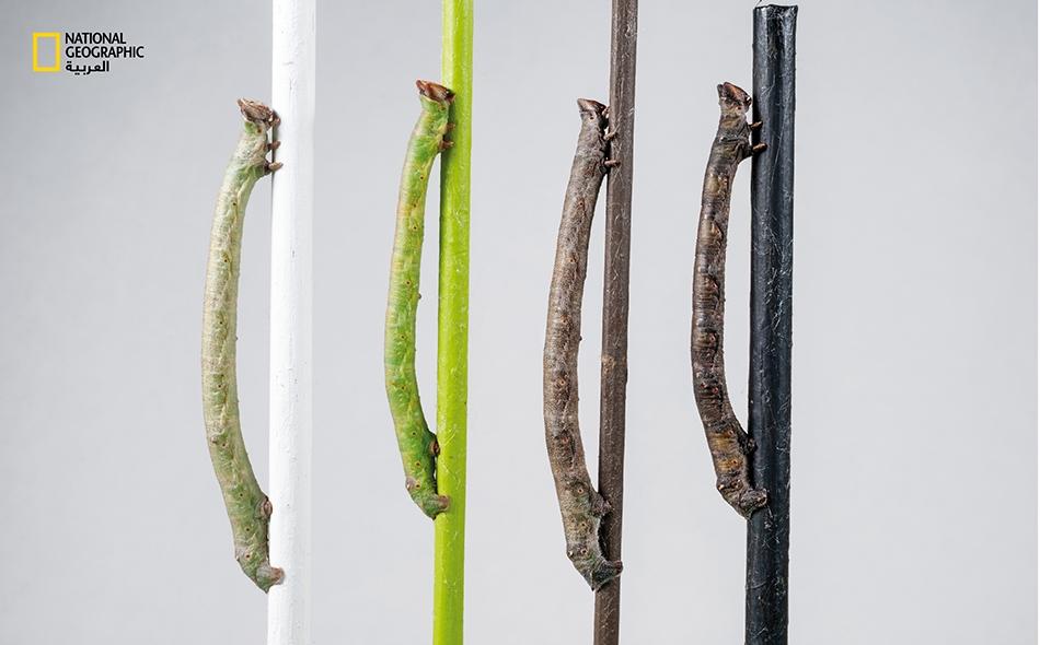 كيف تستطيع حشراتٌ التحول إلى ألوان لا تراها؟