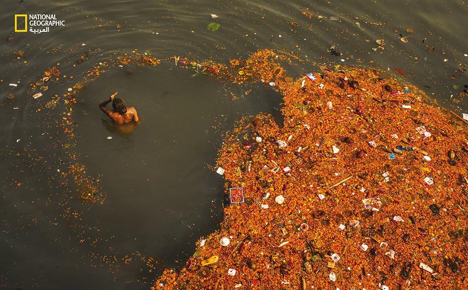 """يغتسل رجل من خطاياه في نهر """"الغانج"""" وسط دوامة من الأقحوان الأصفر، والقمامة البلاستيكية، وبقايا البراز. هذا النهر مقدس لدى الهندوس ومورد حيوي للمناطق ذات الكثافة السكانية الكبيرة والبنية التحتية الهشة؛ لكنه أحد أكثر الأنهار تلوثًا على كوكب الأرض."""