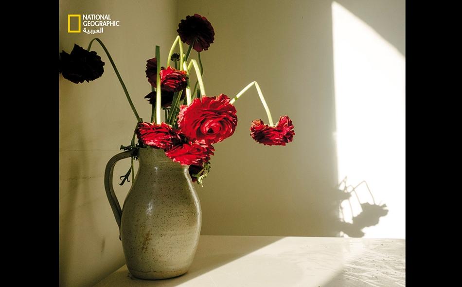 لندن، إنجلترا: تُبرز هذه الزهور المُهداة بمناسبة عيد الأم (يُحتفل به يوم 22 مارس في المملكة المتحدة)، فكرةَ مرور الوقت. الصورة: Olivia Arthur, Magnum Photos