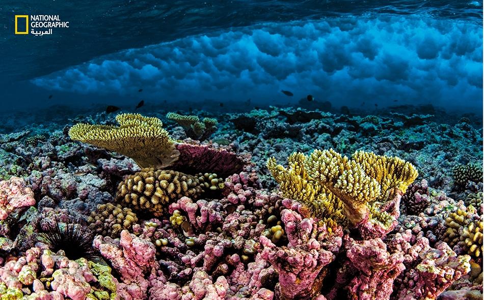 """موجة تتكسر على أوج الحِيد المرجاني في """"حيد كينغمان""""، وهو جزء من """"النُّصب التذكاري الوطني البحري لجزر المحيط الهادي النائية"""". الصورة: Enric Sala"""